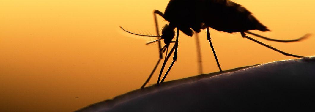 Komary, meszki i kleszcze - ilustracja