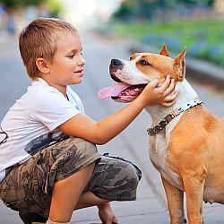Mamo, chcę psa! - okładka