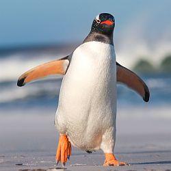 Czy pingwin ma kolana? - okładka