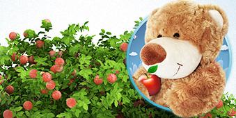 Owocowy Gaj Misia - okładka