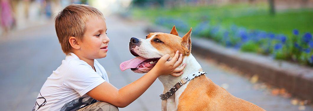 Mamo, chcę psa! - ilustracja